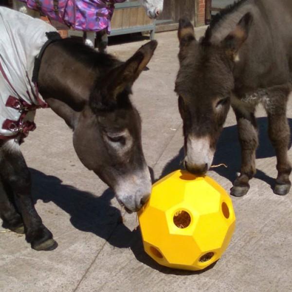 Horse Hay Ball voor geiten en pony's