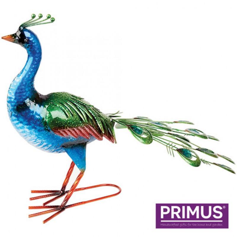 Vibrant Metal Peacock Primus