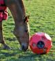 Horse Hay Ball voor paarden