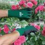 Handschoenen 'Soft N Care Landscape' groen - mt 7/S