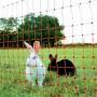 Euronetz 'Ernteschutz' 65/1 afrasteringsnet voor konijnen